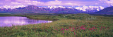 Denali National Park, Alaska, USA Wall Decal by  Panoramic Images