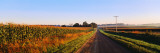 Road Along Rural Cornfield, Illinois, USA Wallstickers af Panoramic Images,