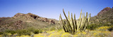 Organ Pipe Cactus, Arizona, USA Wall Decal by  Panoramic Images