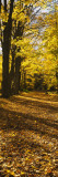 Tree Lined Road, Massachusetts, USA Wall Decal by  Panoramic Images