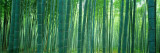 Bamboobos, Sagano, Kyoto, Japan Muursticker van Panoramic Images