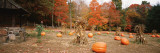 Pumpkins on a Field, Connecticut, USA Wall Decal by  Panoramic Images