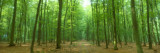 Pathway Through Forest, Mastatten, Germany Wall Decal by  Panoramic Images