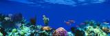 Underwater, Caribbean Sea Kalkomania ścienna autor Panoramic Images
