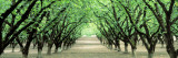 Hazel Nut Orchard, Dayton, Oregon, USA Wall Decal by  Panoramic Images