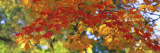 Fall Foliage, Guilford, Baltimore City, Maryland, USA Muursticker van Panoramic Images,