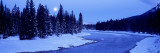 Moon Rising Above the Forest, Banff National Park, Alberta, Canada Wall Decal by Panoramic Images