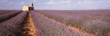 Lavender Field, Valensole Province, France Wall Decal by  Panoramic Images
