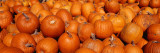 Close-up of Pumpkins Väggdekal av Panoramic Images,