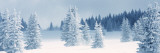 Fresh Snow on Pine Trees, Taos County, New Mexico, USA Wall Decal by  Panoramic Images