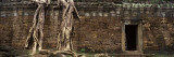 Historic Wall in the City, Ta Prohm, Siem Reap, Cambodia Wall Decal by  Panoramic Images