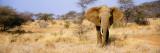 Elephant, Somburu, Kenya, Africa Wandtattoo von  Panoramic Images