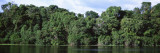 Amazon Rain Forest, Anavilhanas, Brazil Wall Decal by  Panoramic Images