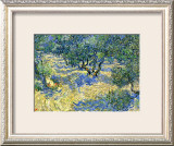 Olive Orchard, c.1889 Framed Giclee Print by Vincent van Gogh