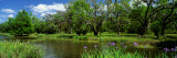 Jungle Gardens, Avery Island, Southern, Louisiana, USA Wall Decal by  Panoramic Images