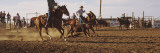 Cowboys Roping a Calf, North Dakota, USA Wall Decal by  Panoramic Images
