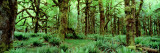 Rain Forest, Olympic National Park, Washington State, USA Autocollant mural par Panoramic Images