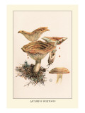 Lactarius Deliciosus Wall Decal by William Hamilton Gibson