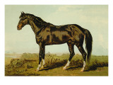 Dongola Horse Wall Decal by Samuel Sidney