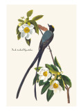 Fork-Tailed Flycatcher Wall Decal by John James Audubon