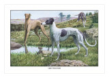 Greyhounds Wall Decal by Louis Agassiz Fuertes