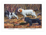 Cocker Spaniel, Clumber Spaniel, and Field Spaniel Wall Decal by Louis Agassiz Fuertes