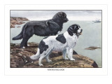 Two Newfoundlands Wall Decal by Louis Agassiz Fuertes