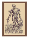 The Fourth Plate of the Muscles Wall Decal by Andreas Vesalius