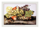 Grapes and Pears with a Snail Wall Decal by Giovanna Garzoni