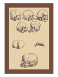 Skulls Wall Decal by Andreas Vesalius