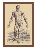 The Second Plate of the Muscles Wall Decal by Andreas Vesalius