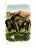 The Bison Wallsticker
