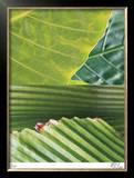 Secret Garden IV Limited Edition Framed Print by M.J. Lew