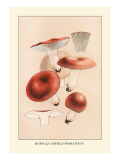 Russula Emetila Wall Decal by William Hamilton Gibson