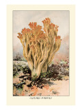Clavaria Formosa Wall Decal by William Hamilton Gibson