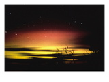 Aurora Australis on Kangaroo Island Wall Decal by David Miller