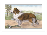 Scotch Collie Wall Decal