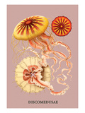 Jellyfish: Discomedusae Wall Decal by Ernst Haeckel