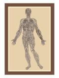 Nervensystem Wandtattoo von Andreas Vesalius