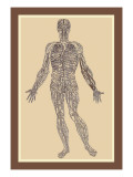 Nervous System Wall Decal by Andreas Vesalius