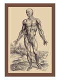 The First Plate of the Muscles Wall Decal by Andreas Vesalius