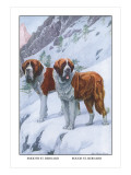 Two Saint Bernards Wall Decal by Louis Agassiz Fuertes