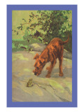 Irish Terrier Puppy Wall Decal by Diana Thorne