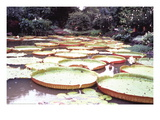 Five Foot Lily Pads Wall Decal by John Bortniak