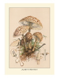 Agaricus Procerus Wall Decal by William Hamilton Gibson