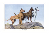 Great Danes Wall Decal by Louis Agassiz Fuertes