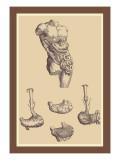 Bauch Wandtattoo von Andreas Vesalius