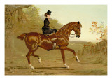 Book of the Horse Wall Decal by Samuel Sidney