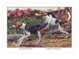 English Foxhound and American Foxhound Wall Decal by Louis Agassiz Fuertes