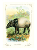 The Tapir Wall Decal